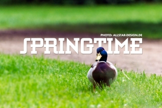 Naturfotografie Ente