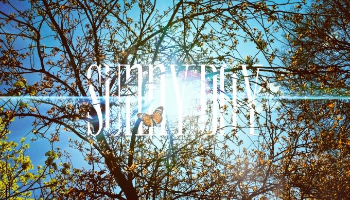sunnyday_lq